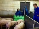 Schwein gehabt!_2